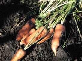Blogga om trädgård